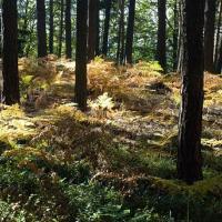 Les v Českém ráji