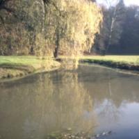 Vrba nad řekou