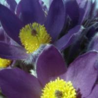 Květy 1