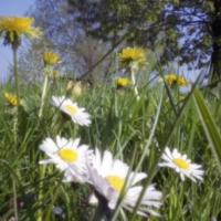 Luční květy na zahrádce