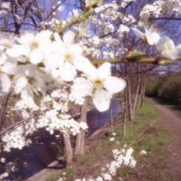 Jaro u Rokytky