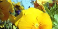 Květy 3
